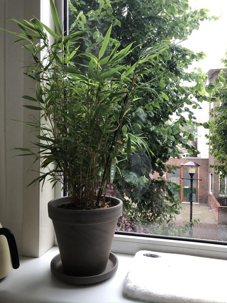 In 3 stappen naar een huis met planten